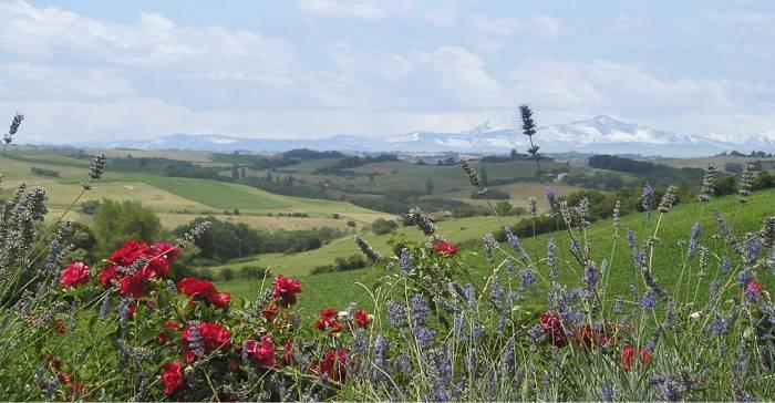 1w_panorama-fleuri-1